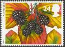 Zarzamora (Rubus fruticosus).