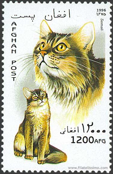 1996 Afganistan Gatos06