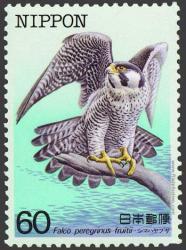 Falco peregrinus fruitii