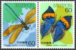 Calopteryx cornelia, Kallima inachus.