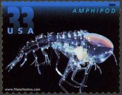 Amphipod