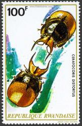Ceratocoris Distortus