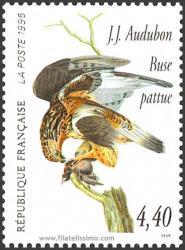 Buteo lagopus