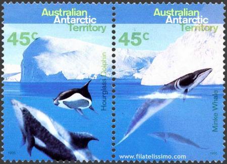 Delfín del Antártico y Rorcual aliblanco