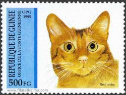 Gatos Domésticos (Felis silvestris catus)