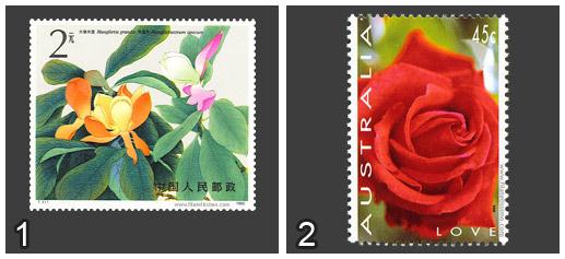 Magnolia vs Rosa
