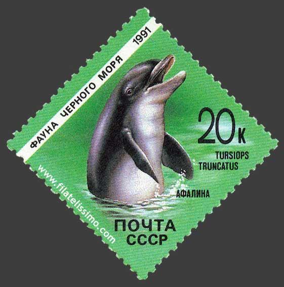 Delfin Mular Fauna Marina