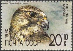 El Halcón Sacre (Falco cherrug)