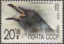 El Cuervo común (Corvus corax)
