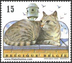 Gato Europeo Atigrado
