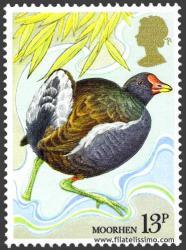 Polla de agua (Gallinula chloropus)
