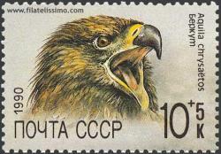 El Águila real (Aquila chrysaëtos)