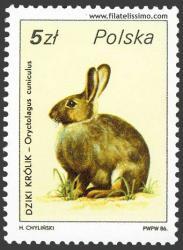 Conejo común o europeo (Oryctolagus cuniculus)