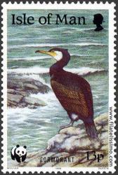 Cormorán (Phalacrocoracidae)