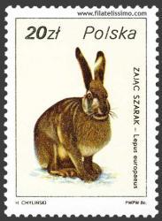 Liebre común o europea (Lepus europaeus)
