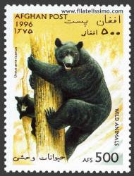 Oso negro (Ursus americanus)
