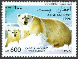 Oso polar u oso blanco (Ursus maritimus)