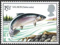Salmón común o del Atlántico (Salmo salar)