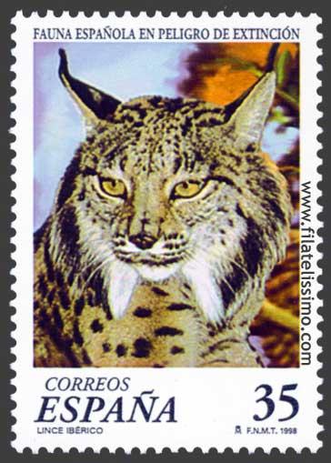 Lince Iberico Lynx Pardinus
