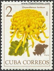 Chrysanthemum hortórum