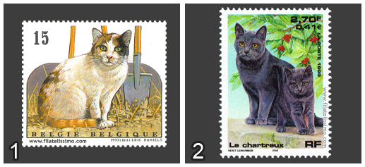 Gato Europeo vs Gato Cartujo