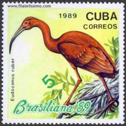 Ibis escarlata (Eudocimus ruber)