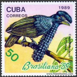 Pájaro Paraguas (Cephalopterus ornatus)