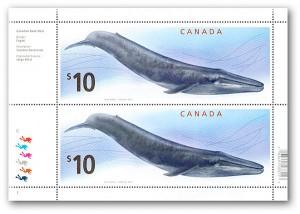 Bloque sellos ballena azul, Canada 2010