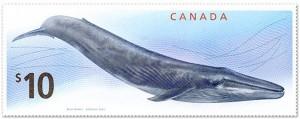 Sello ballena azul, Canada 2010